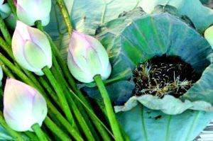 the au lotus2