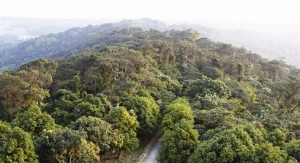 La forêt primitive sur l'île de Cô Tô.