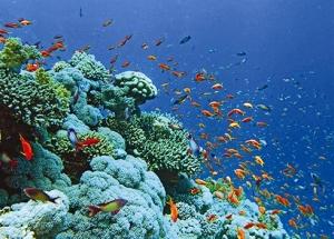 Cù Lao Chàm a été désigné en 2009 par l'UNESCO comme réserve biosphère du monde pour sa diversité des espèces marines