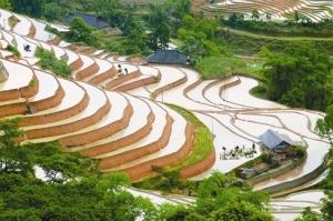 Les rizières en gradins de Hoàng Su Phi