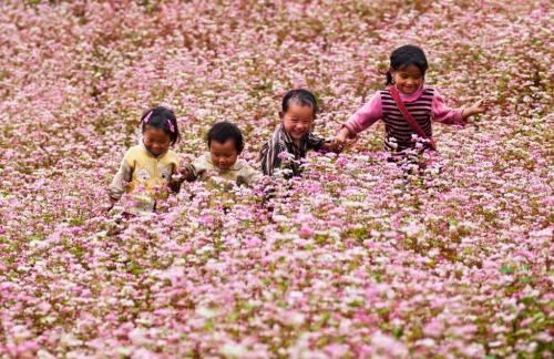 Floraison de Tam Giac Mach