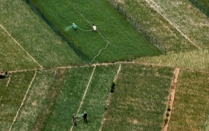 Les-champs-d'oignons-et-d'ail