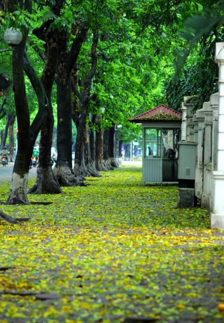 les-feuilles-mortes11