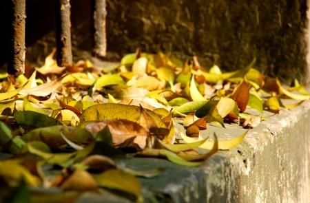 les-feuilles-mortes12
