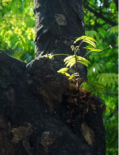 les-feuilles-mortes14
