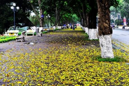 les-feuilles-mortes2
