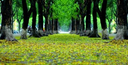 les-feuilles-mortes9