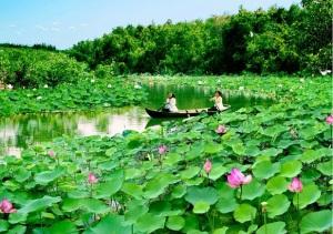 lotus-a-dong-thap