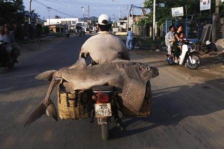 Moto-Vietnamienne8