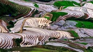 riziere-en-terrasse-mu-cang-chai