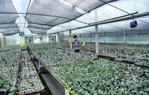 culture-d'orchidees-de-hautes-technologies