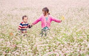fete-des-fleurs-sarrasins