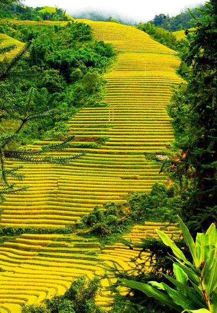 riziere-en-terrasse-a-sapa