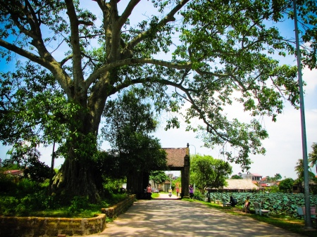 village-duong-lam