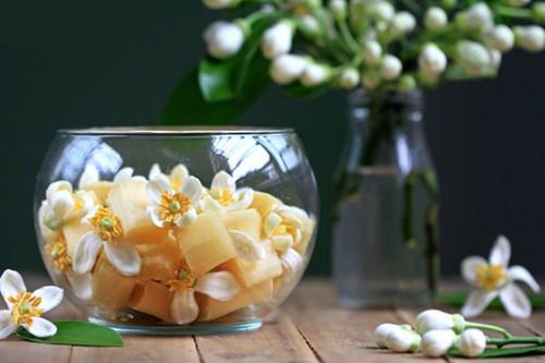 canne à sucre et fleurs de pamplemousse