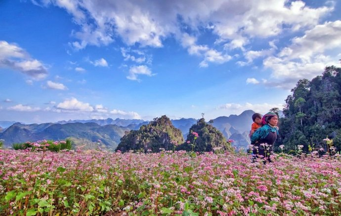 fleurs de sarasin